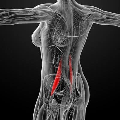 Le muscle de l'âme et comment il impacte ta vie