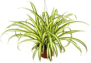 5 plantes indispensables pour détoxifier ta maison